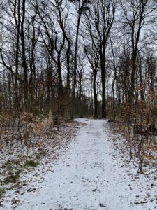 Aprilschnee auf Waldweg