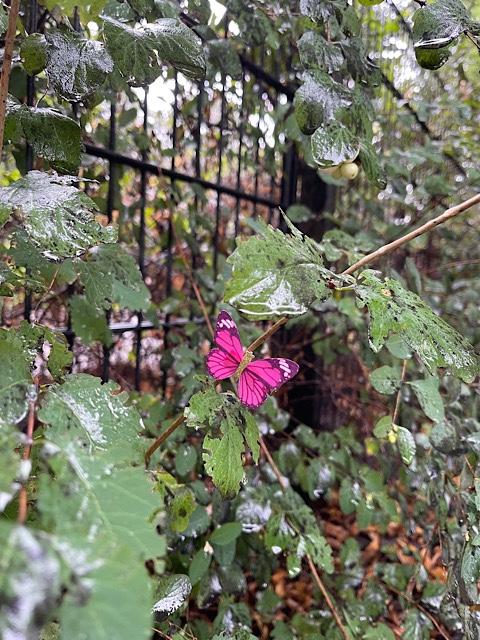 Schmetterling in Hecke